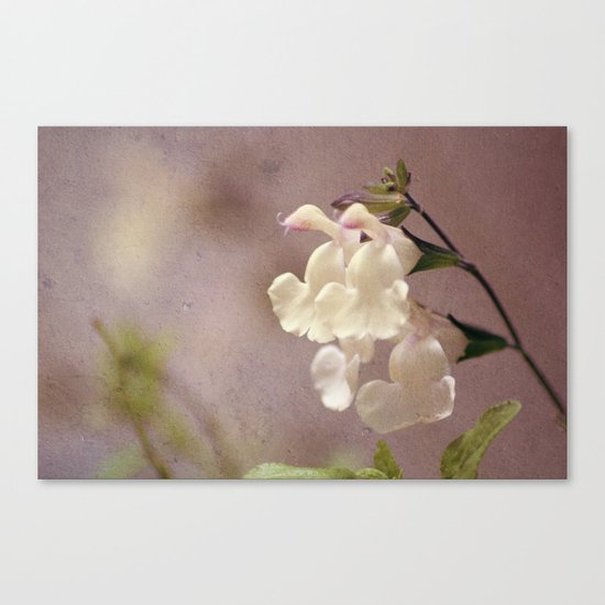 White flower and texture Canvas Print