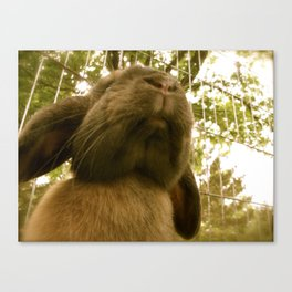 Giant Bun Canvas Print
