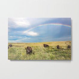 Rainbows and Bison - Buffalo on the Tallgrass Prairies of Oklahoma Metal Print
