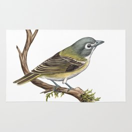 Blue-headed Vireo (Vireo solitarius) Rug