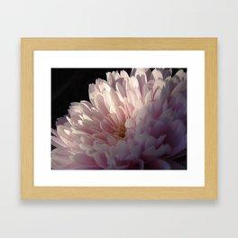 Pink Light Framed Art Print