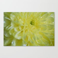Yellow and Mellow Canvas Print