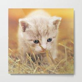 Kitten | Chaton Metal Print