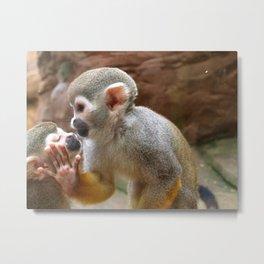 Monkey Love and Attitude  Metal Print