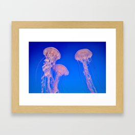 Bloom of Jellies Framed Art Print