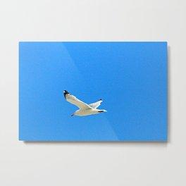 Gull in Blue Metal Print