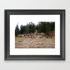 Colorado, wildlife Framed Art Print