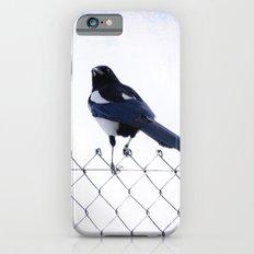 Pie iPhone 6s Slim Case