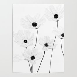 black and white cosmos Poster