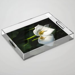 Close-up of Giant White Calla Lily Acrylic Tray