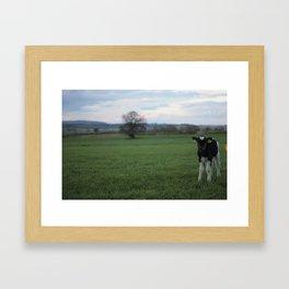 Curious Calf Framed Art Print