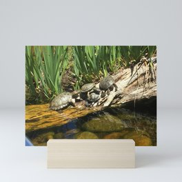 Turtles Mini Art Print