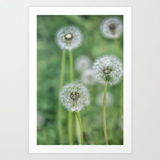 Dandelion flower on green meadow Art Print