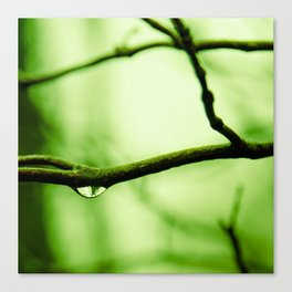 Waterdrop in the Fog Canvas Print