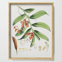 Vanda Cathcarti Lindley (syn Esmeralda cathcartii Lindley) from Illustrations of Himalayan plants (1 Serving Tray