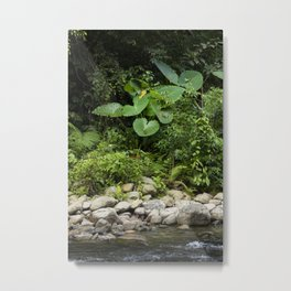 Lush leaves, in the amazing jungles of Sumatra, Indonesia. Metal Print