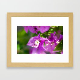 Bouganvilla Beauty Framed Art Print