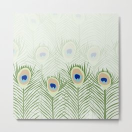 Peacock feathers in real natural colors green and blue Metal Print