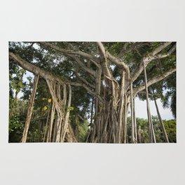 Banyan Tree at Bonnet House Rug