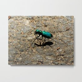 Six spotted tiger beetle Metal Print