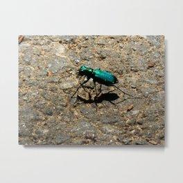 Six spotted tiger beetle Metal Print