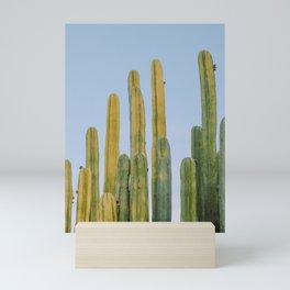 Desert Cactus XVIII / San Luis Potosi, Mexico Mini Art Print