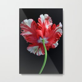 Red Parrot Tulip Metal Print
