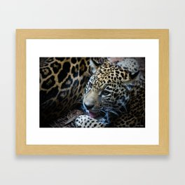 Jaguar Cub Framed Art Print