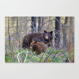 Sow & cub in Jasper National Park | Canada Canvas Print