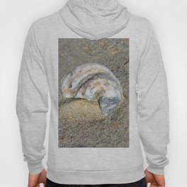 Shell in the Sand Hoody