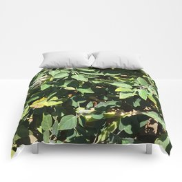 Jimson Weed (Sativa Datura) Comforters