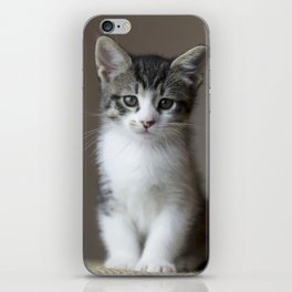 Jack - Kitten Portrait #2 (2016) iPhone Skin