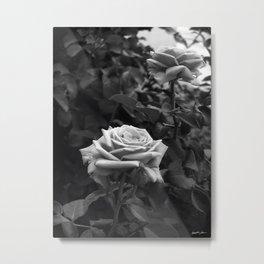 Pink Roses in Anzures 5 B&W Metal Print