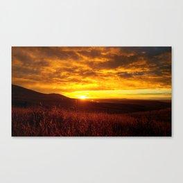 (#146) Sunlit Wheat Canvas Print