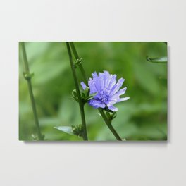 Nature's Garden Purple And Green Metal Print