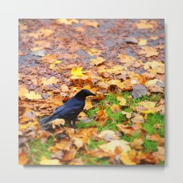 Corbeau d'automne. Metal Print
