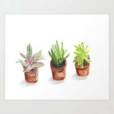3 Potted Plants Art Print