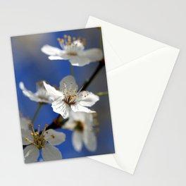 Weißdorn Stationery Cards