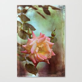 Rose 263 Canvas Print
