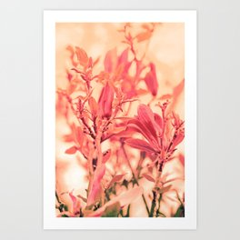 Magnolia Love in Apricot Art Print
