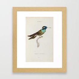Jardine, W. The Naturalist's Library.  bird Framed Art Print