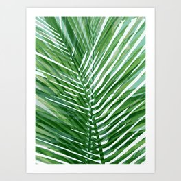 Abstract Palm Leaves   Green Art Print