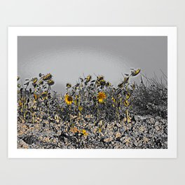 Sunflowers in the Camino de Santiago Art Print