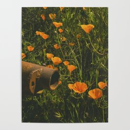 California Poppies 012 Poster