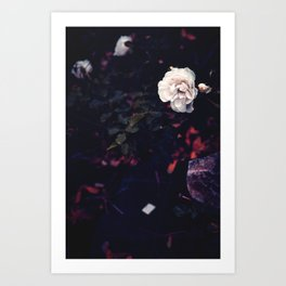 The roses & the echoes Art Print