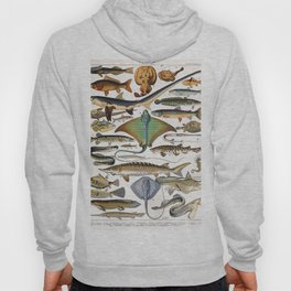 Adolphe Millot - Poissons A - French vintage nautical poster Hoody