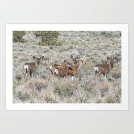 Group of Mule Deer Art Print