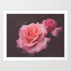 Hidden Rose Art Print