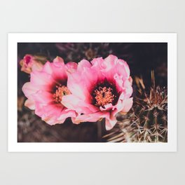 Faded Desert Blooms Art Print