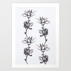 Magnolia in black and white Art Print